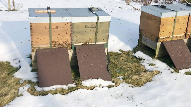 Reinigungsflug in der Wintersonne